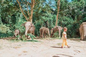 Elefanti in Thailandia, un'esperienza indimenticabile, ma attenzione!